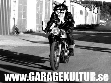 the happy cat searching for freedom on a cool norton  café racer motorcycle