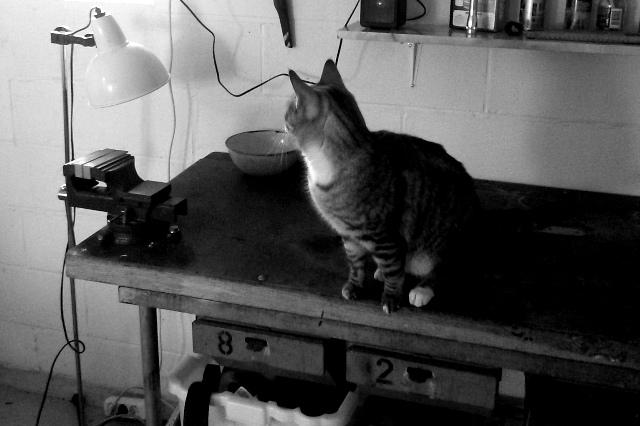 En katt i experimentverkstaden