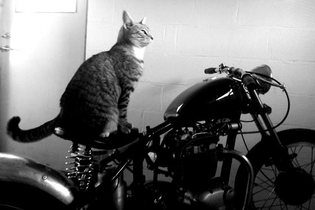 En katt som heter Pär Lagerkvist sitter inne i garaget på en gammal traja och väntar på att det ska bli vår.